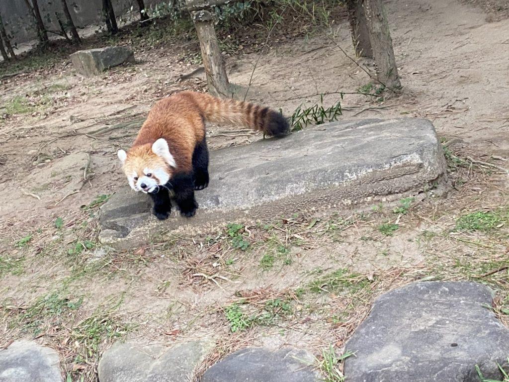 自然フェニックス動物園 宮崎市